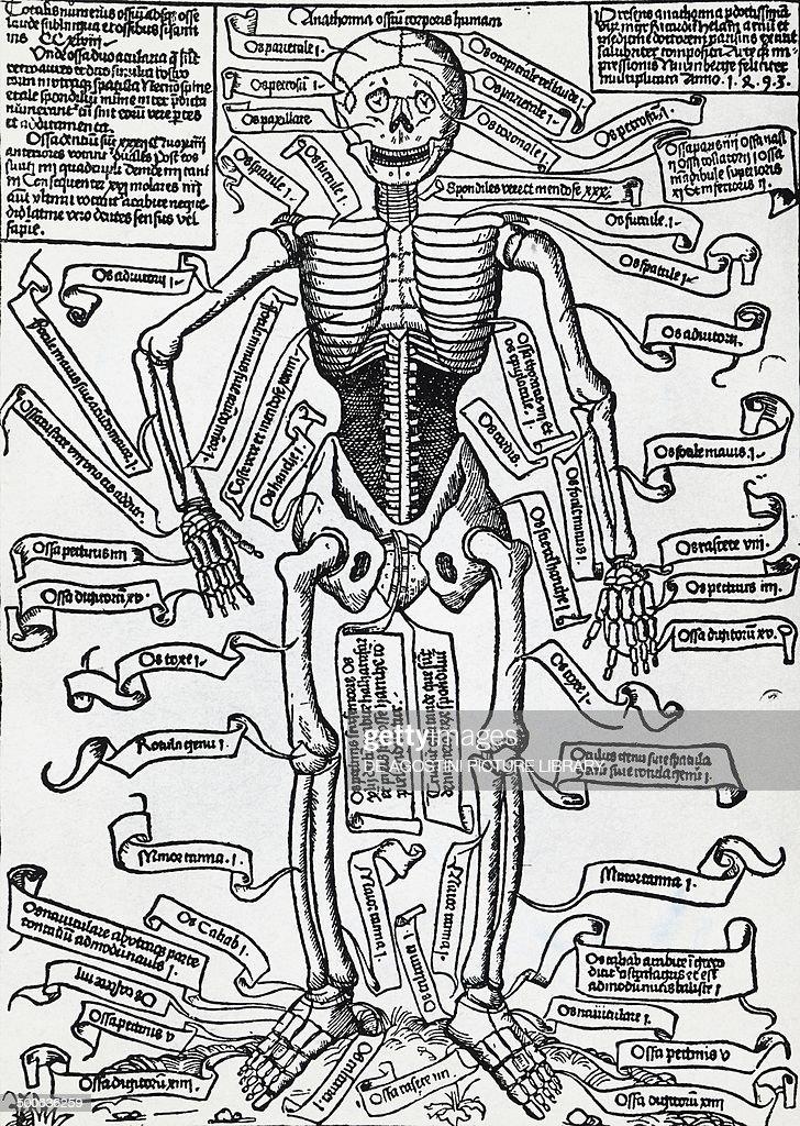 Excepcional Anatomía Cleveland Club Elaboración - Imágenes de ...
