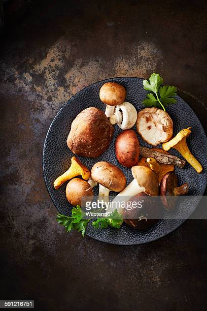 Plate of different mushrooms on rusty ground