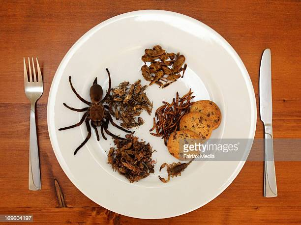 A plate of edible insects Skye Blackburn's company Bug Shop