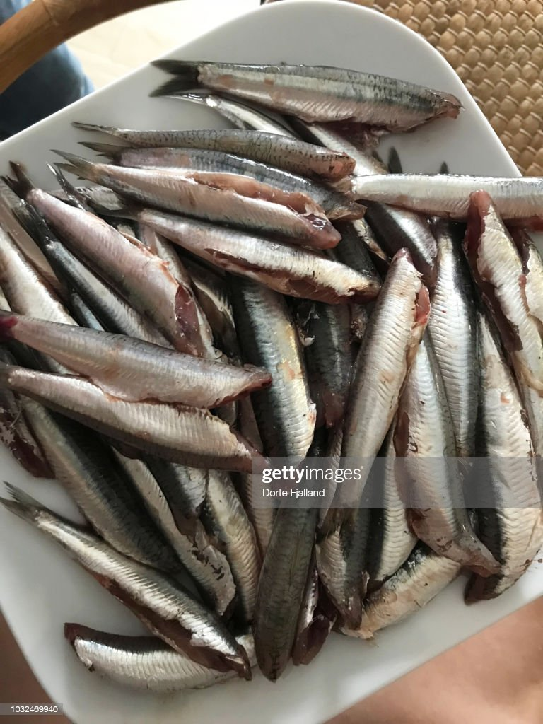 Plate of fresh, cleaned, raw boquerones (small sardines) ready to be fried in olive oil : Foto de stock