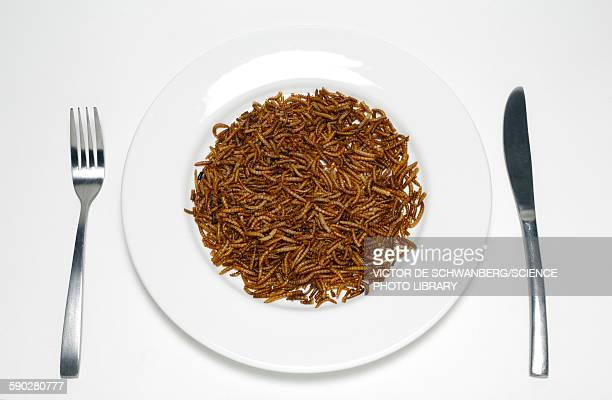 plate of mealworm - mealworm stock photos and pictures