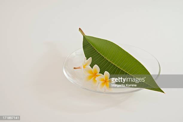 A plate of plumeria flowers and leaf