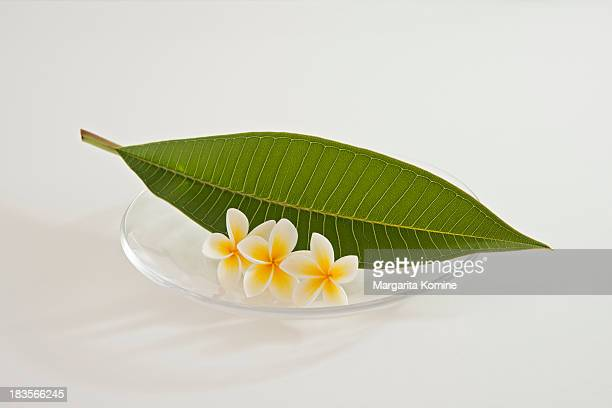 A plate of three plumeria flowers and leaf