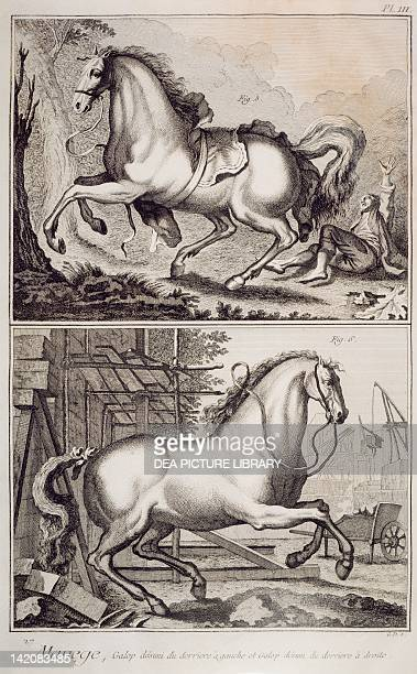 Plate showing horse training disunited gallop of hind leg on left lead and disunited gallop of hind leg on right lead Engraving from Denis Diderot...