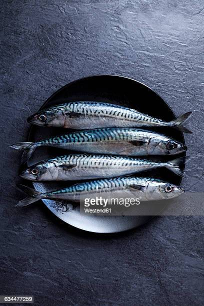 Plate with four sardines on slate