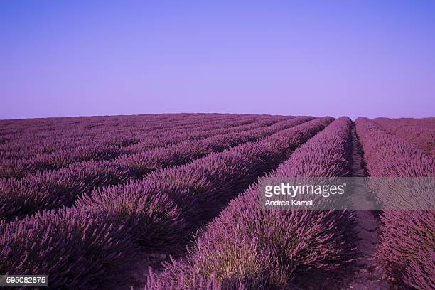 Plateau de Valensole, Provence, France