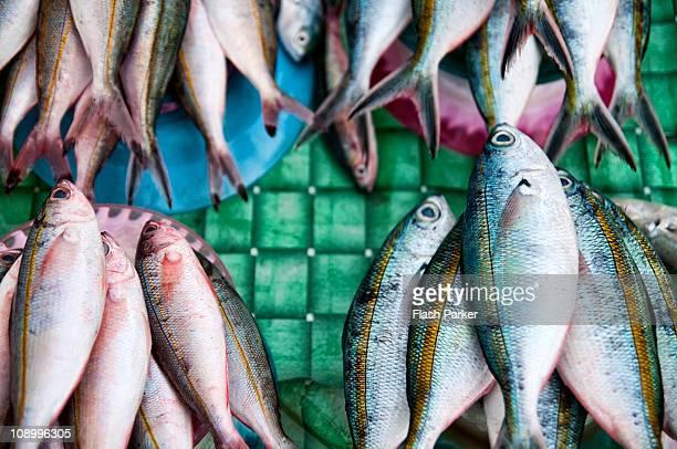 Plates of Fresh Fish