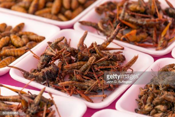 plates of insects for sale in market - insetto foto e immagini stock