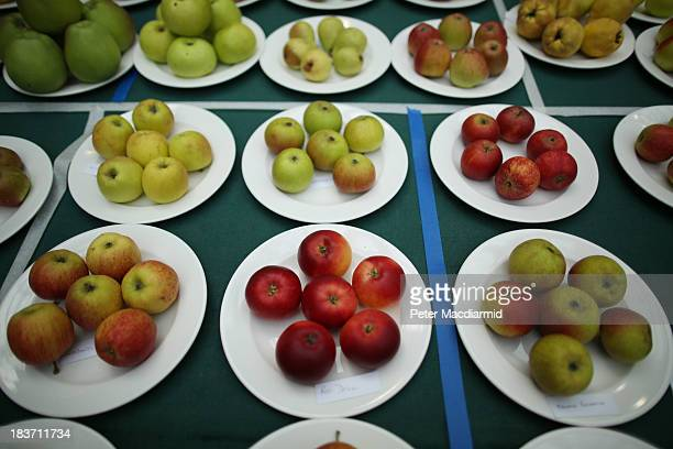 Plates of prize winning apples are displayed at the Royal Horticultural Society Harvest Festival Show on October 9 2013 in London England The...