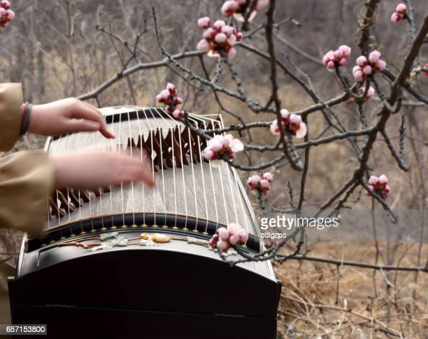 Play Chinese zither in flowers