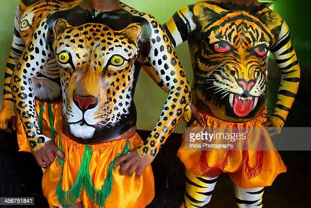 play of the tigers - grupo mediano de animales - fotografias e filmes do acervo