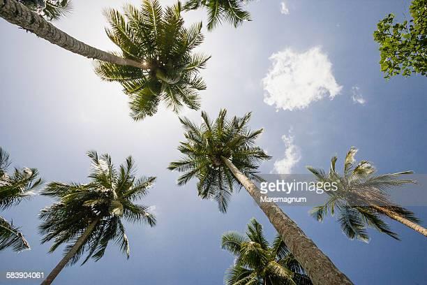 playa (beach) bonita, palms - palm tree stock pictures, royalty-free photos & images