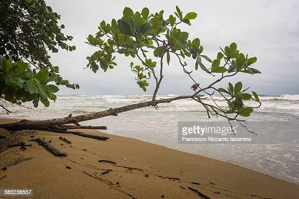 playa chiquita, costa rica - iacomino costa rica foto e immagini stock