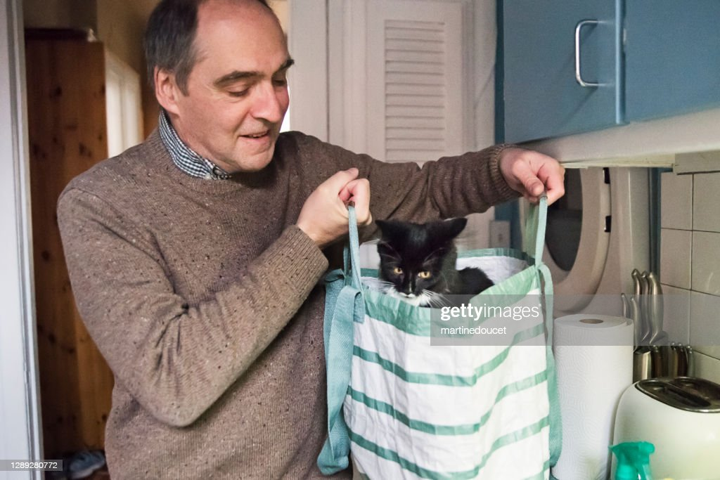 Playful 4 months kitten in reusable grocery bag. : Stock Photo