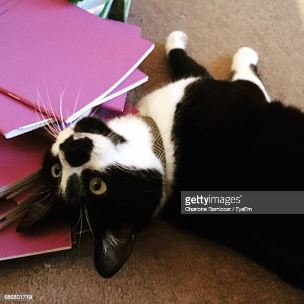 Playful Black And White Cat