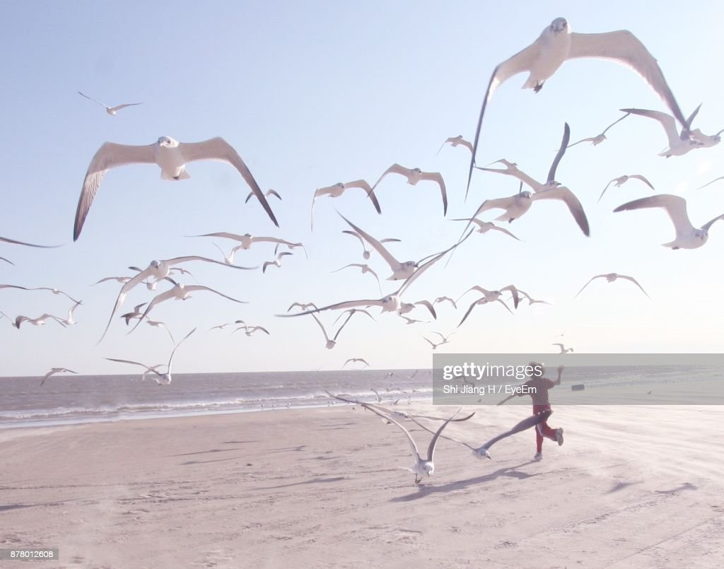 Playful Boy With Birds At Beach Against Sky : Stock-Foto