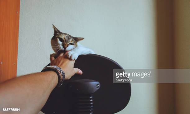 playful cat - female hairy arms stock photos and pictures