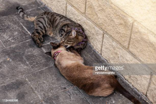 playful cats - mjrodafotografia fotografías e imágenes de stock