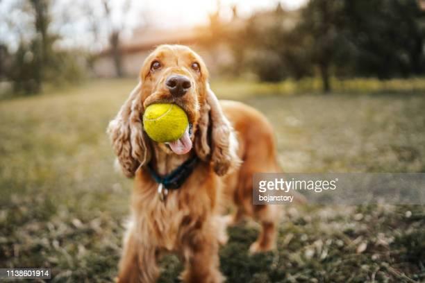 perro juguetón - linda rama fotografías e imágenes de stock