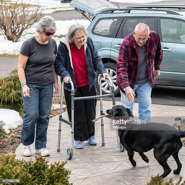 Playful Dog Welcoming Senior Family Home From Emergency Room Visit