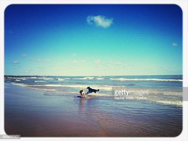 playful dogs on beach against sky - rachel wolfe stock pictures, royalty-free photos & images