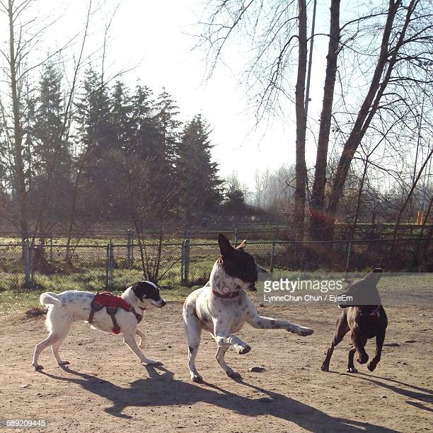 Playful Dogs On Field Against Clear Sky