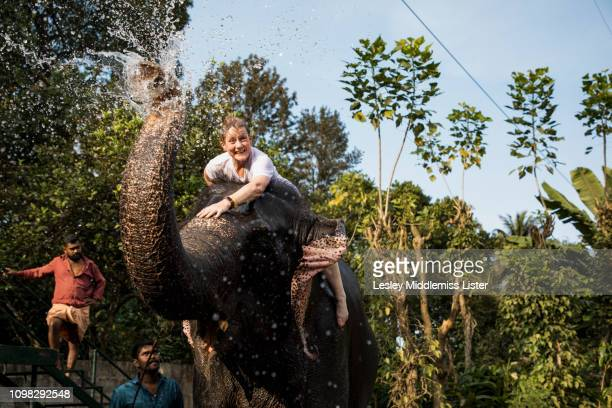 playful elephant and tourist - kerala elephants stock pictures, royalty-free photos & images