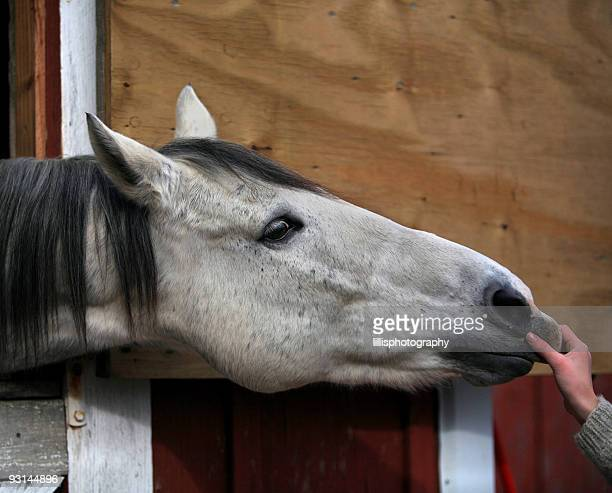 Playful Horse in Stall