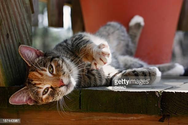 Playful Kitten in the Sun