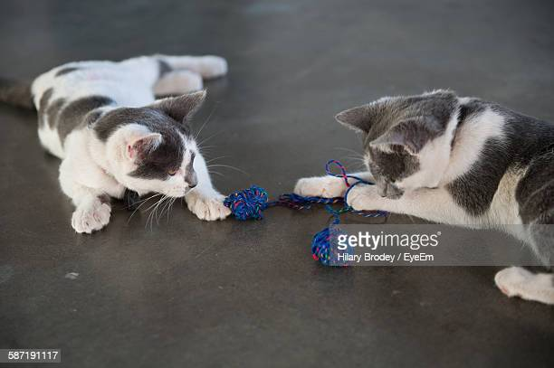 Playful Kittens With Ball Of Wools