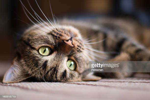 playful kitty cat - schattig stockfoto's en -beelden