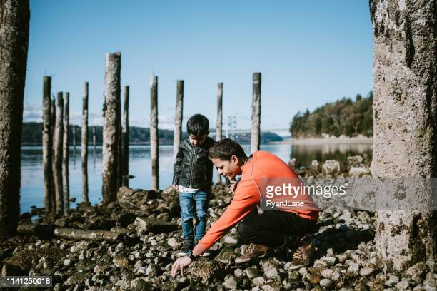 playful loving indian family at beach together - puget sound stock pictures, royalty-free photos & images