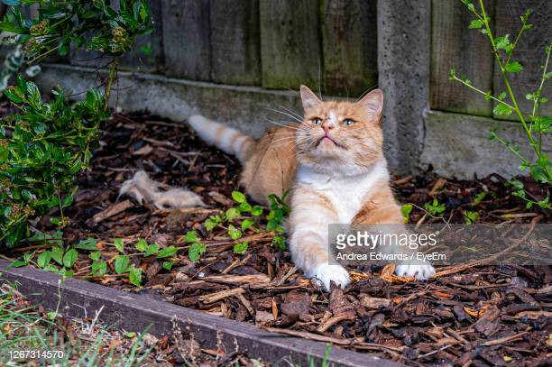 playful orange cat - cats stock pictures, royalty-free photos & images