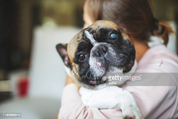 playful pets - love is blind stock pictures, royalty-free photos & images