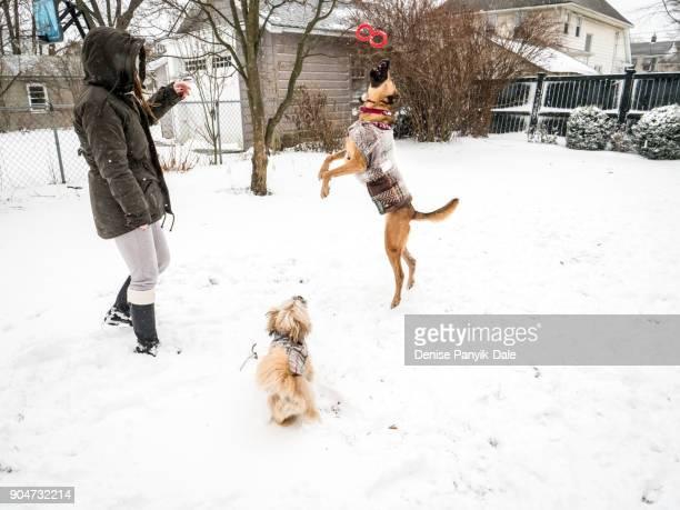 playful pets - panyik-dale stock photos and pictures