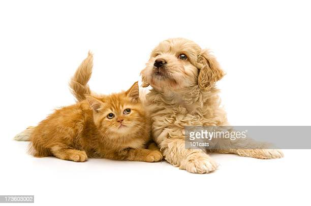 playful - cat and dog stock pictures, royalty-free photos & images