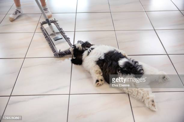 playful puppy clinging on to a floor wiper being used by a child on a tiled floor - um animal imagens e fotografias de stock