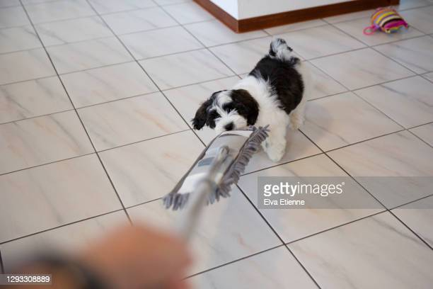 playful puppy tugging on a floor wiper being used by an adult on a tiled floor - 掃く ストックフォトと画像