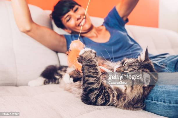 playful siberian cat enjoying playing on sofa with her owner - cat family stock pictures, royalty-free photos & images