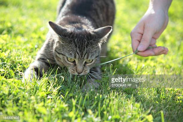 Playful tabby cat in meadow