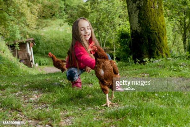 playful young girl trying to catch the hen - animal welfare stock photos and pictures