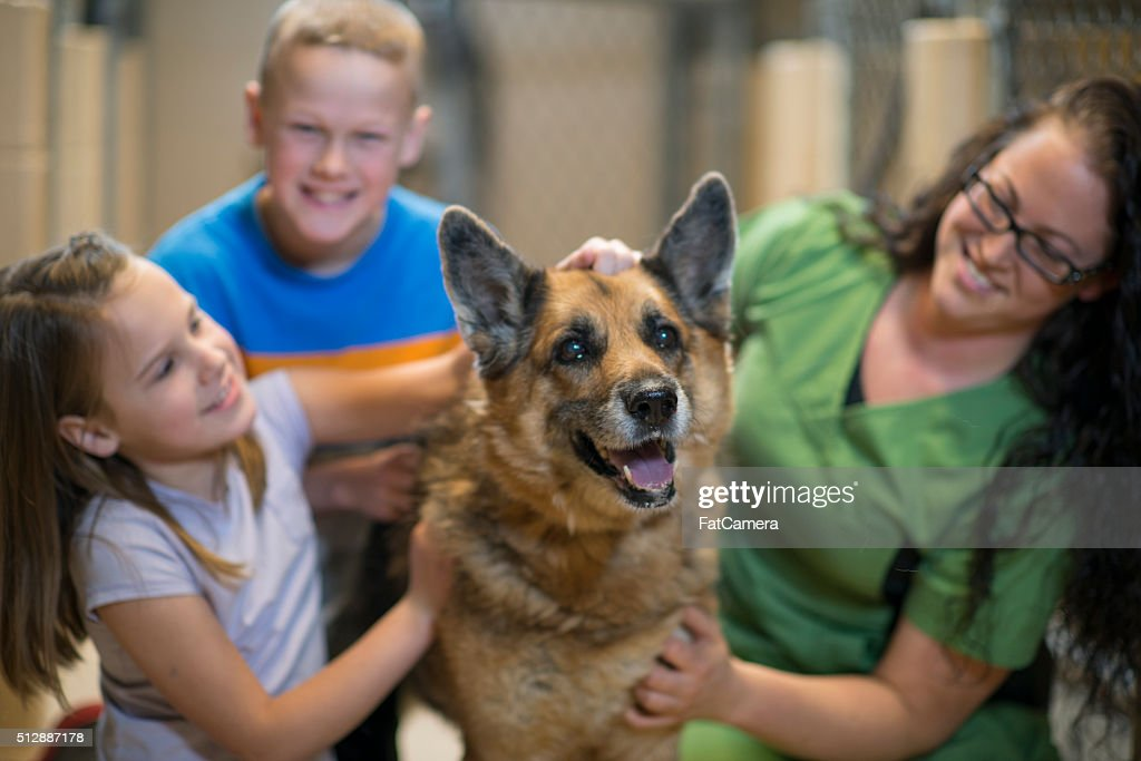 Playfully Petting a Dog : Stock Photo