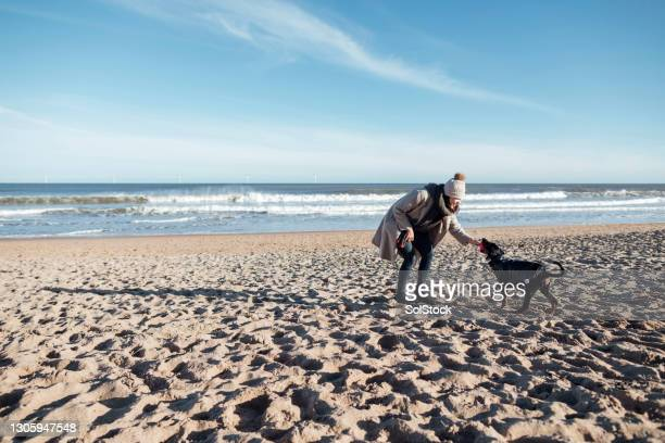 playing at the beach - pet toy stock pictures, royalty-free photos & images