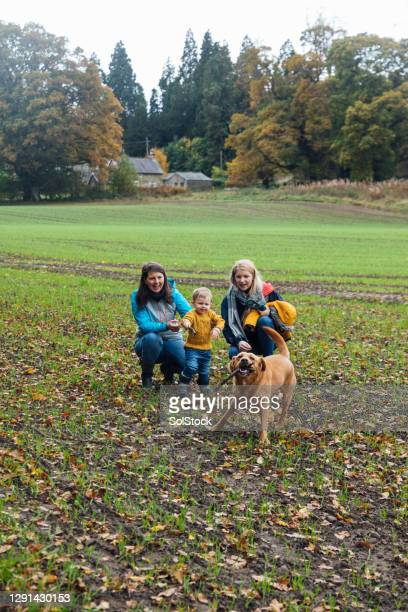 playing fetch - babyhood stock pictures, royalty-free photos & images