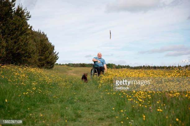 playing fetch with my dog in nature - nature reserve stock pictures, royalty-free photos & images