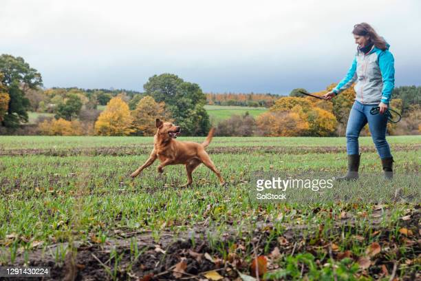playing fetch with my dog - dog walking stock pictures, royalty-free photos & images