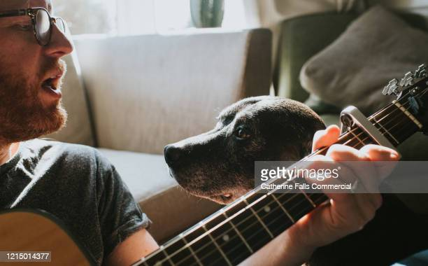 playing guitar to dog - songwriter stock pictures, royalty-free photos & images