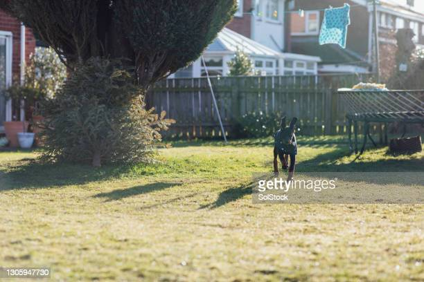playing in the garden - pet clothing stock pictures, royalty-free photos & images