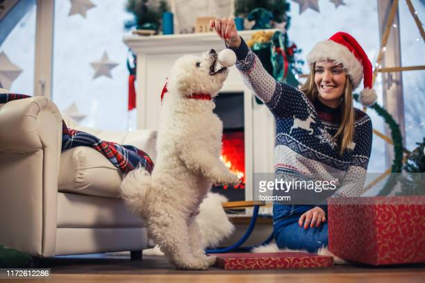 playing on christmas day - dog knotted in woman stock pictures, royalty-free photos & images