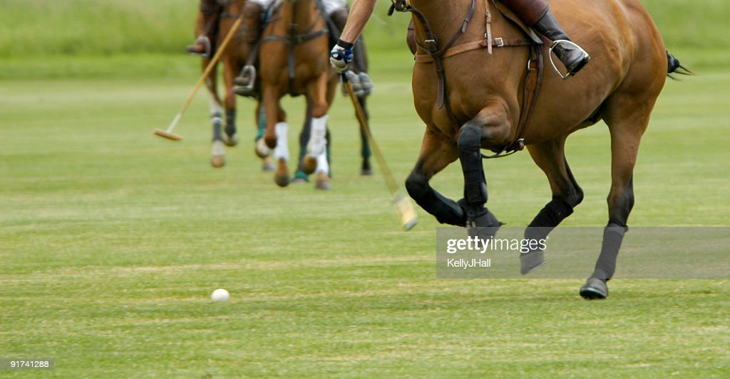 Playing polo : Stock Photo